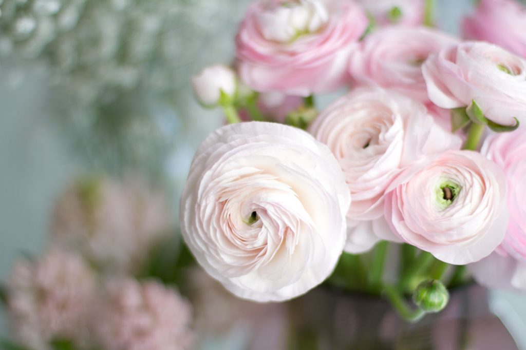 pink ranunculus spring flowers blog post on lifetime-pieces.com
