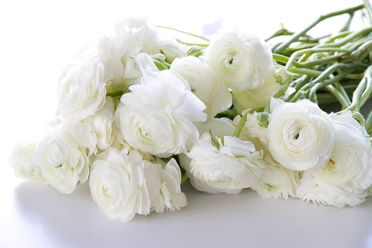 white peonies, spring flowers, blogpost Lifetimepieces.com