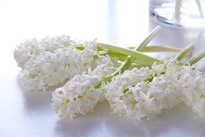 white hyacinths, spring flowers, blogpost Lifetimepieces.com