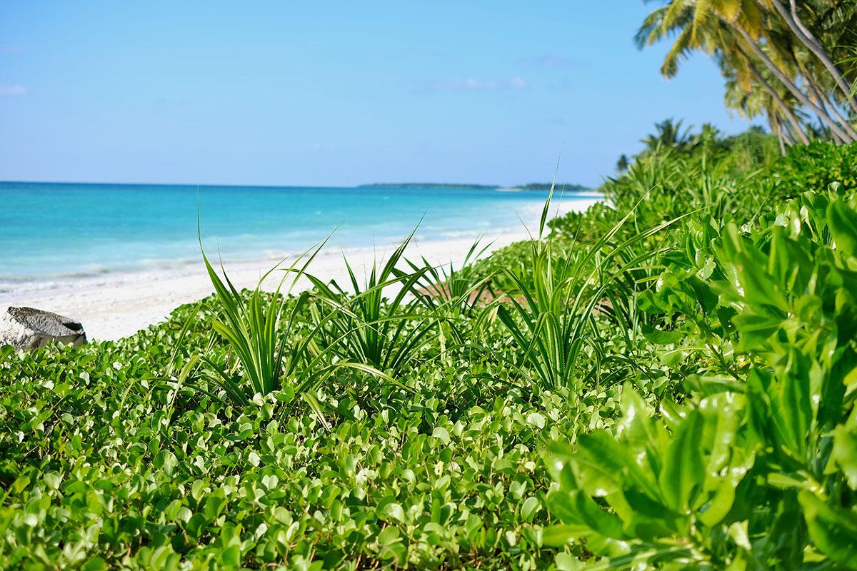 Kandima, Maldive islands, blue sky, Indian Ocean, beach, palms, vegetatoin ,blog post about Maldives on lifetime-pieces.com