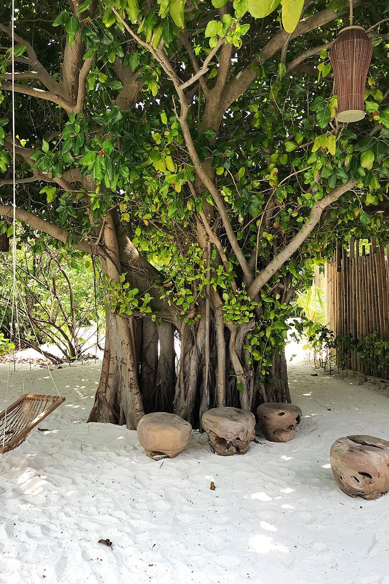 Fushifaru, banyan tree, sand, grey swing, wooden seats, lantern, blog post about Maldives on lifetime-pieces.com