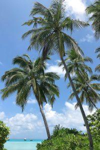 Kandima, palms, blue sky, beach, Indian Ocean, boats, blog post about Maldives on lifetime-pieces.com