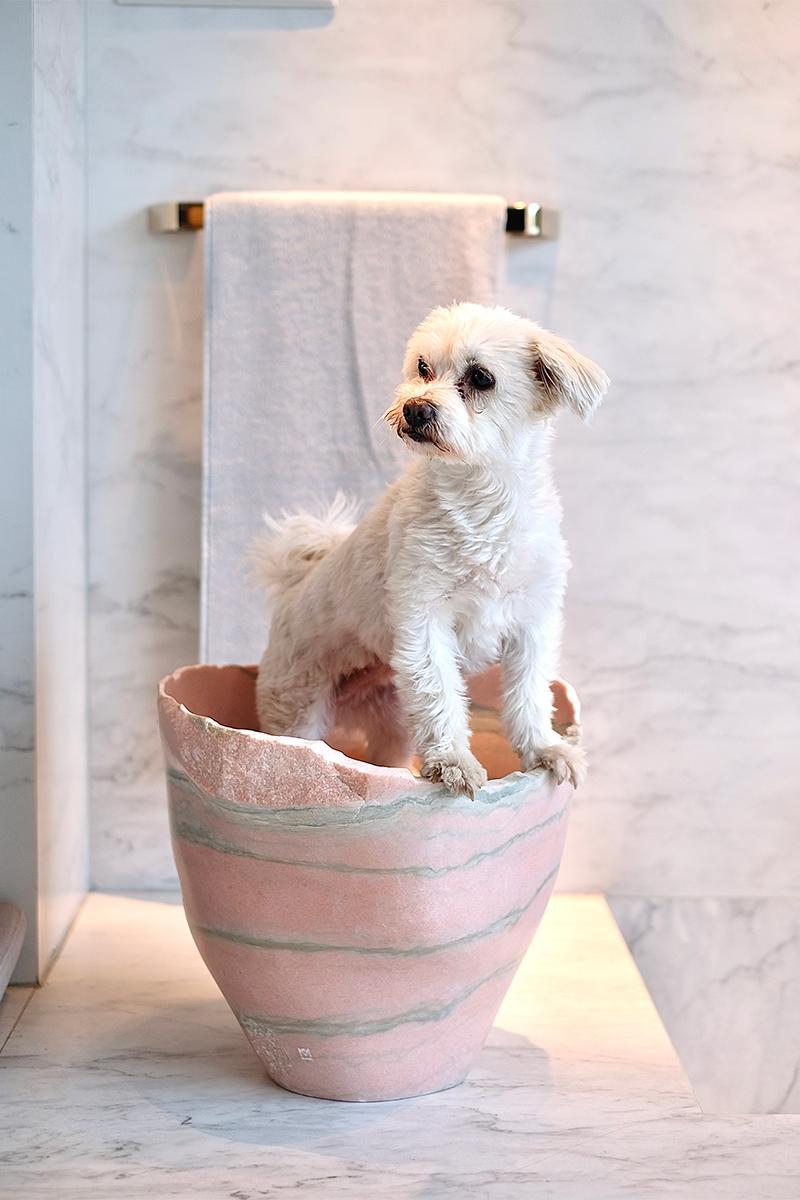 weißer Hund in Vase, Marmorfliesen, Marmor, Fliesen, Trend